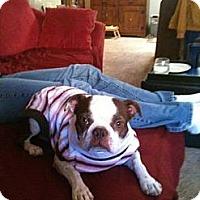 Adopt A Pet :: Dolly - Temecula, CA