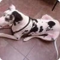 Adopt A Pet :: Allie - Inver Grove Heights, MN