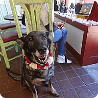 Adopt A Pet :: Mable Sable - Green Cove Springs, FL