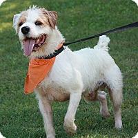 Adopt A Pet :: Neville - Brattleboro, VT