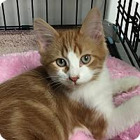 Adopt A Pet :: Bobber - Topeka, KS