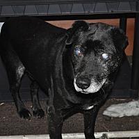 Adopt A Pet :: Smokey - Hardeeville, SC