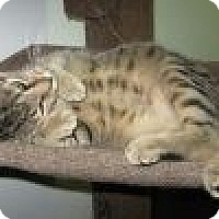 Adopt A Pet :: Fausto - Powell, OH