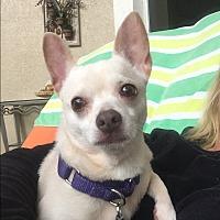 Adopt A Pet :: Sassy - Ft. Lauderdale, FL