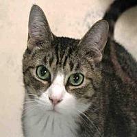 Adopt A Pet :: ROMEO - Hampton Bays, NY