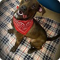 Adopt A Pet :: Bandit - Hopewell, VA