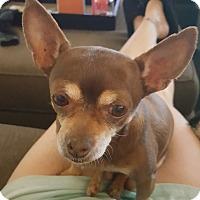 Adopt A Pet :: Lola - Rancho Cucamonga, CA