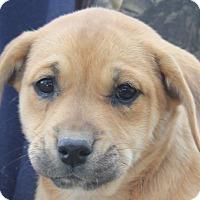Adopt A Pet :: Katy Pawtry - Colonial Heights, VA