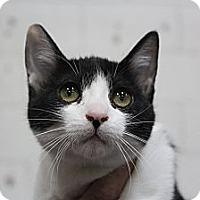 Adopt A Pet :: maddison - Santa Monica, CA