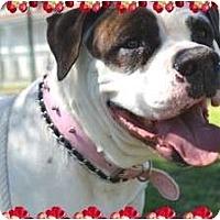 Adopt A Pet :: Lola - Phoenix, AZ
