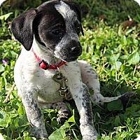 Adopt A Pet :: Tilda - Staunton, VA