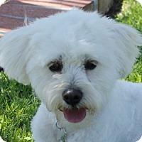 Adopt A Pet :: Cookie - La Costa, CA