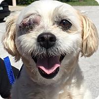 Adopt A Pet :: Coliflor - Orlando, FL