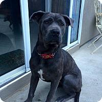 Adopt A Pet :: Isabelle - Long Beach, CA