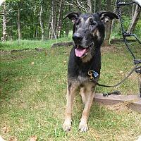 Adopt A Pet :: Bruce - Louisville, KY