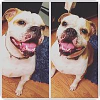 Adopt A Pet :: Luna - Odessa, FL