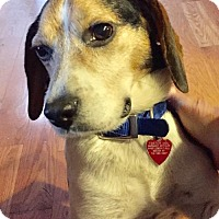 Adopt A Pet :: HOMER - Tonawanda, NY