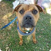 Adopt A Pet :: Zeus - Umatilla, FL