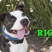 Adopt A Pet :: *RIO - Camarillo, CA