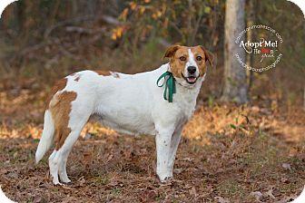 Australian Cattle Dog Mix Dog for adoption in Groton, Massachusetts - Bebe