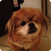 Adopt A Pet :: Jewel - Davie, FL