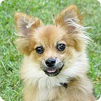 Adopt A Pet :: Gunter - Mocksville, NC