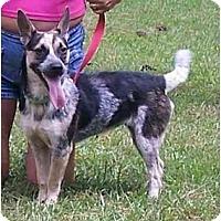Adopt A Pet :: Moon - Little River, SC