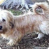 Adopt A Pet :: Henry - Seattle, WA