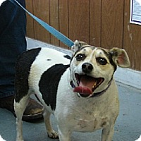 Adopt A Pet :: SISSY - Scottsburg, IN