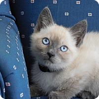Adopt A Pet :: Sajja - Davis, CA