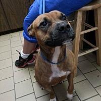 Adopt A Pet :: Walter - Baxter, TN