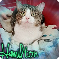 Adopt A Pet :: Hamilton - Odessa, TX