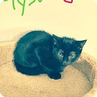 Adopt A Pet :: Tyson - Jackson, NJ