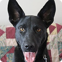 Labrador Retriever/German Shepherd Dog Mix Dog for adoption in Hurricane, Utah - ABBY