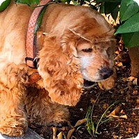 Adopt A Pet :: June - Santa Barbara, CA
