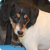 Adopt A Pet :: Phoenix - Prole, IA