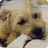 Adopt A Pet :: Paco - McKinney, TX