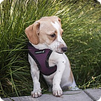 Adopt A Pet :: Jiffy - Berkeley, CA