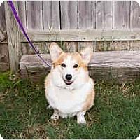 Adopt A Pet :: Tucker - Inola, OK