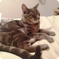 Adopt A Pet :: Steve - Vancouver, BC