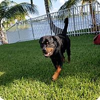 Adopt A Pet :: Bruno II - New Smyrna Beach, FL