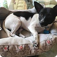 Adopt A Pet :: A - OLAF - Burlington, VT