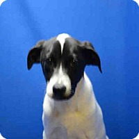 Adopt A Pet :: ARCHIE - Pearland, TX