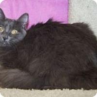 Adopt A Pet :: Scarlett - Colorado Springs, CO