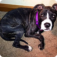 Adopt A Pet :: Riley ~ Adoption Pending - Youngstown, OH