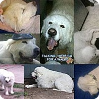 Adopt A Pet :: Maximus - Missouri City, TX
