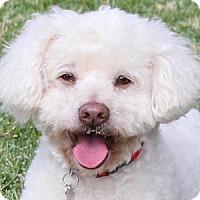 Adopt A Pet :: Charlie Brown - La Costa, CA