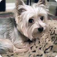 Adopt A Pet :: Sammy - Statewide and National, TX