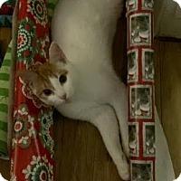 Adopt A Pet :: Moonshine Gets into Mischief - McDonough, GA