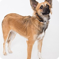Adopt A Pet :: Rhondo - Jupiter, FL